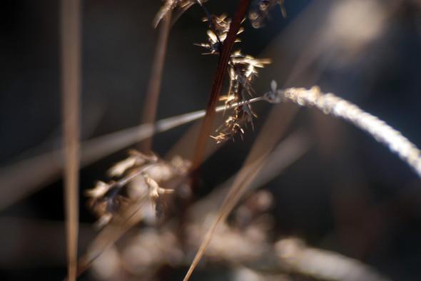 Trotz Streulichtblende diffundieren Teile des Gegenlichts in die Frontlinse. (Foto: Martin Timm)