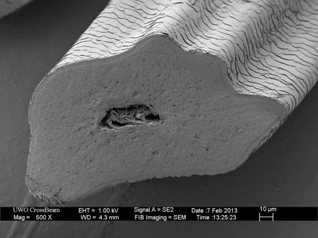 microscopio_imagens_15