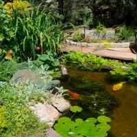 'A Look' Into The Garden - Part II