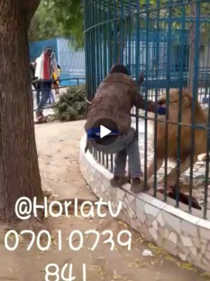 Video: Guy fights with lion 🦁 after it bites his hand ✋