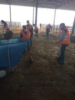 Iğdır canlı hayvan pazarında temizlik çalışmaları