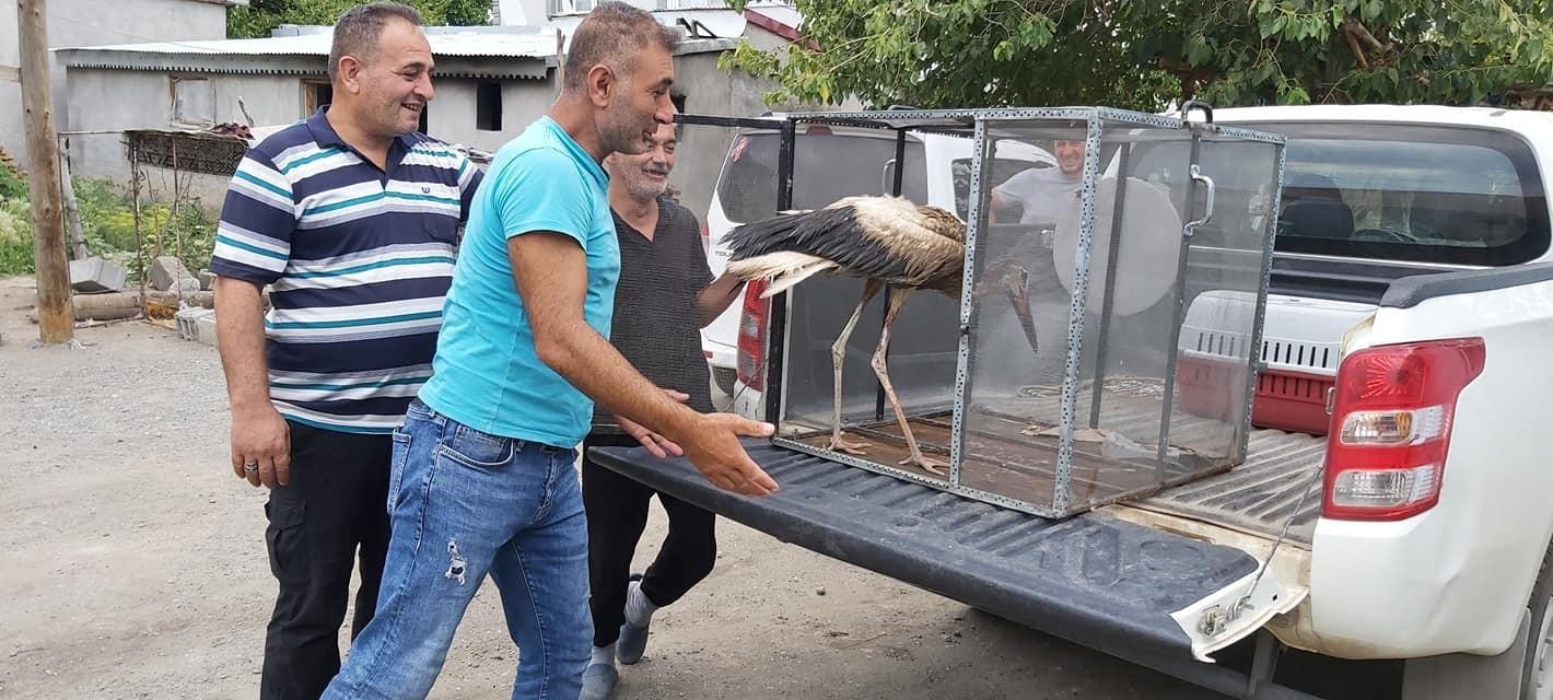 Leylek ve Ebabil kuşu tedavi altına alındı