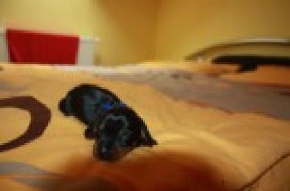 Black Jack Iggy Arbuckle2