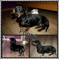 Poppy Child PRO-EURO8