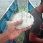 SIARAN PERS BERSAMA Perjanjian Perdagangan Bebas Indonesia dan Norwegia Rugikan Nelayan Indonesia