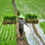 UU Pertanian Lindungi Korporasi