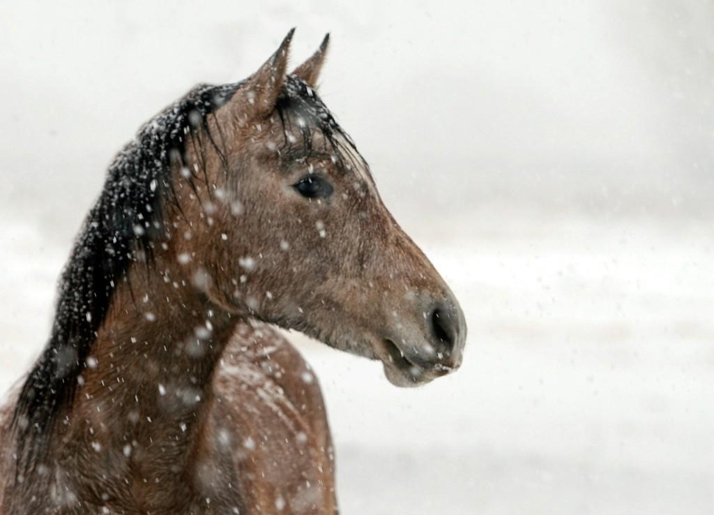 horse-422118_1280