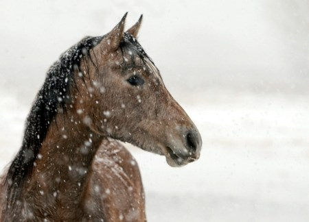 Horse Arena Footing Freeze