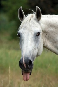 horse-937683_960_720