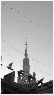 Pigeons, siwfts and a bug!