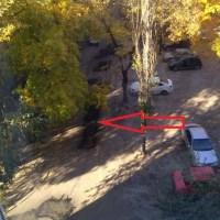 После крика души Михаила Гребенщикова в его воронежском дворе начался ремонт