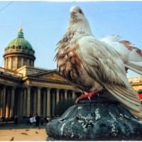 Воронежский фотограф рассказала о том, как делает потрясающие снимки на мобильник