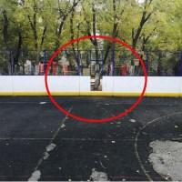 Руководство 19 школы Воронежа с футбольной площадки спилило ворота