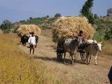 Farmers in Central India