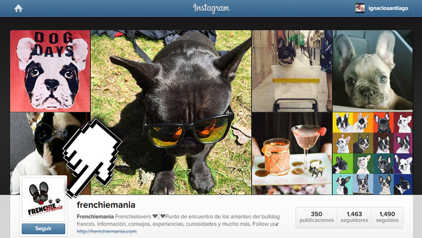 instagram frenchiemania