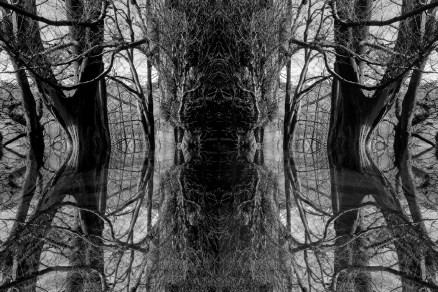 mirror-tree