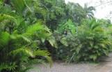 Lush Jamaica