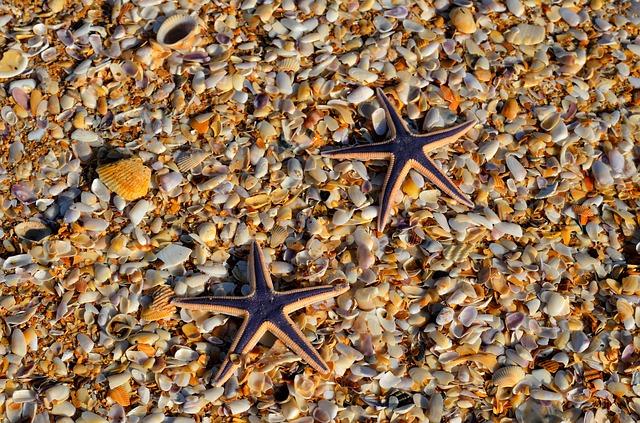 starfish-1617563_640