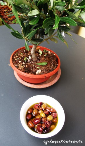 Olive taggiasche e piccolo ulivo