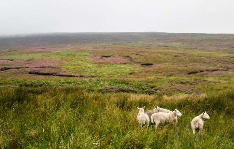Irlanda, costa sud-est: itinerario da Hook Head a Howth