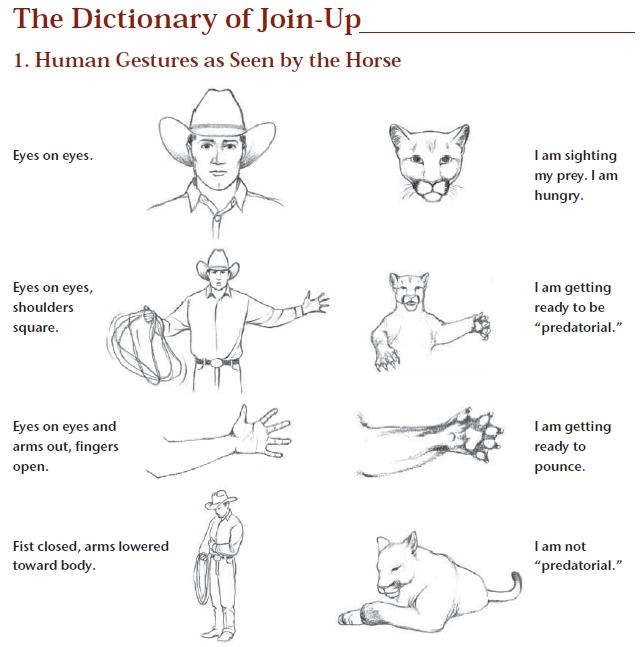 the language of equus