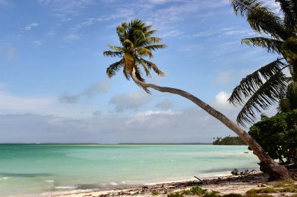 Image_Tropical photo