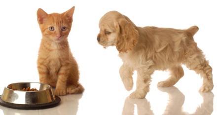 Pet Food Illustration