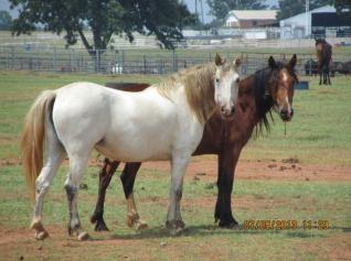 BLM Horses 1