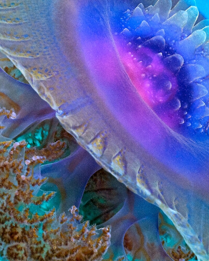 Crown Jellyfish Close Up By Henry Jager Redbubble