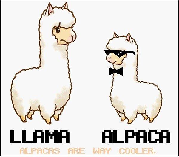 Alpacas Are Way Cooler Llama Vs Alpaca By Ahoytisnet