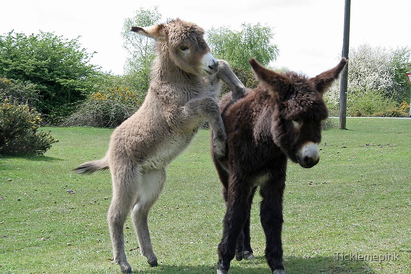 Baby Donkeys At Play By Ticklemepink Redbubble