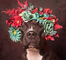 Molly Pit Bull Gifts