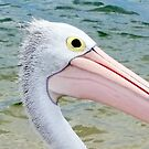 Eye of a Pelican by JulianneB