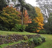 WOLLANGAMBE GARDENS, MOUNT WILSON, NSW. by Phil Woodman