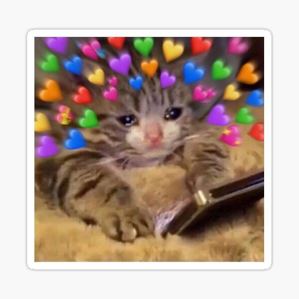 Love Physics Tmakespeopli Cry Make A Grumpy Cat Meme On Me Me