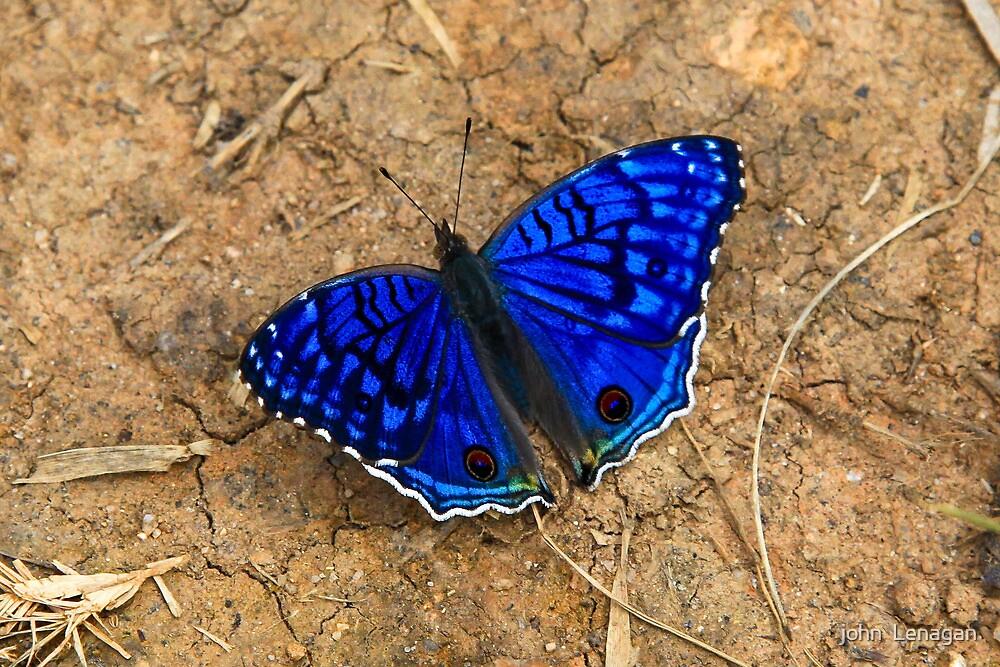 Butterflies Home Decor