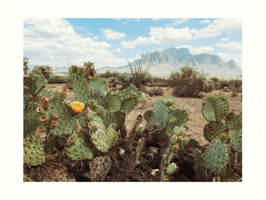 Superstitious Arizona Desert Mountain Cactus Bloom Art