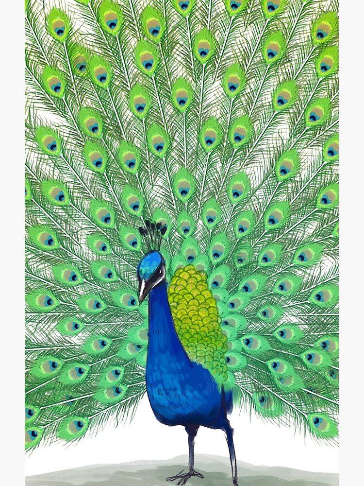 Colorful Peacock Painting Art Greeting Card By Lgdesigns Redbubble