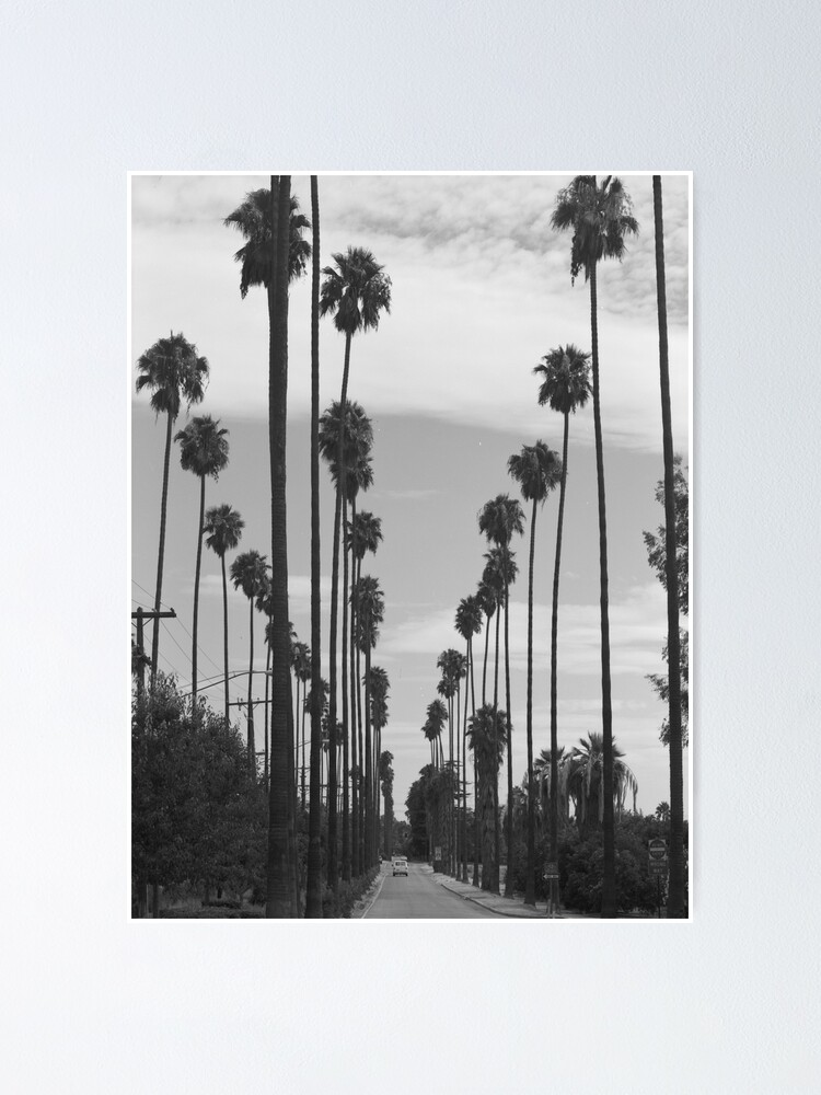 Vintage Black White California Palm Trees Photo Poster By Bravuramedia Redbubble