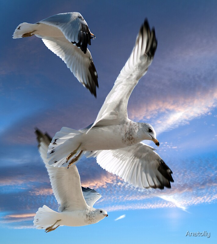 Three Seagulls In Flight By Anatoliy Redbubble
