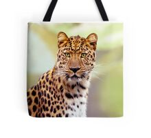 Leopard Photo Image Tote Bag. Leopard photograph image looking directly at you with his yellow / green eyes and green background colors.