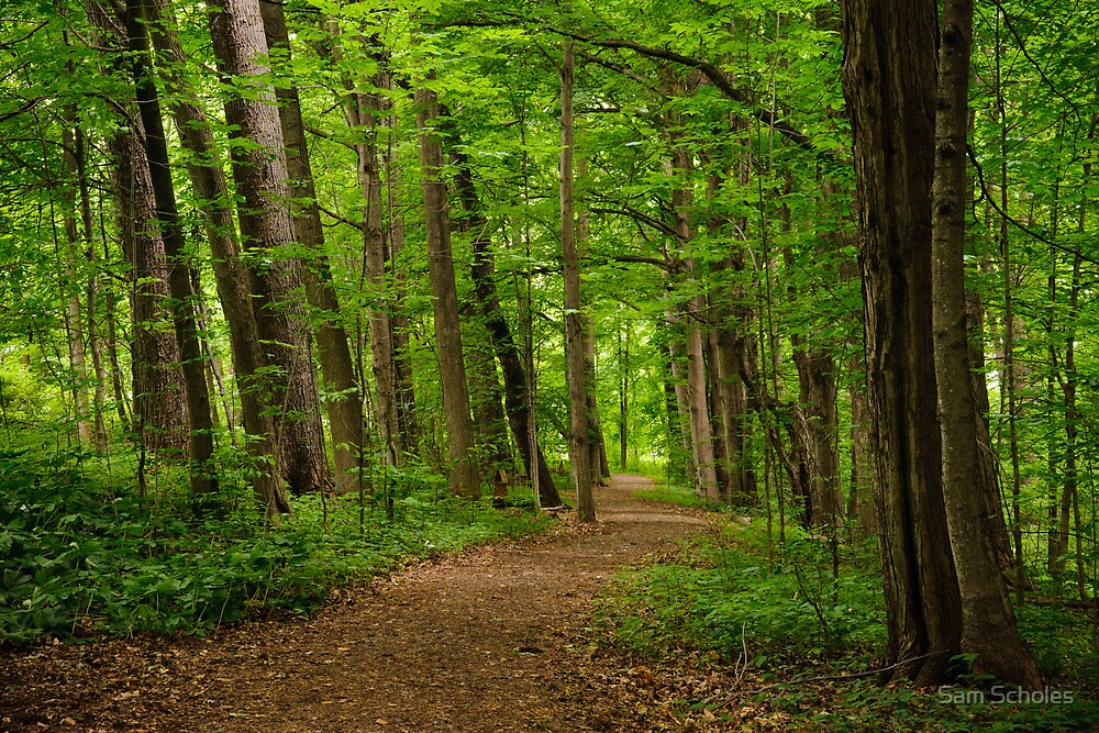 Sacred Grove Path By Sam Scholes Redbubble
