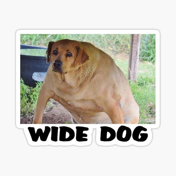 Pin Von Tank Girl Auf Funny Lustige Hund Bilder Hund Funnies
