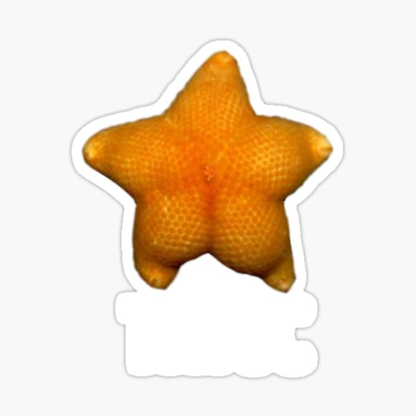 Today S The Day Starfish Meme Template لم يسبق له مثيل الصور