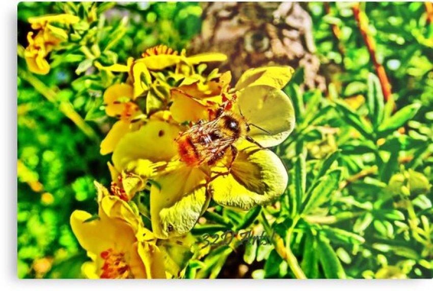 Elusive Bee by 32DARTS