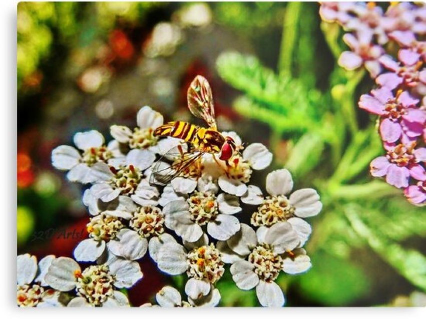 Meet the Pollinators, No.1 by 32DARTS
