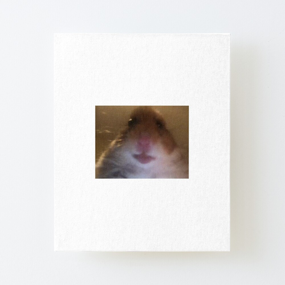 Hahahah Hamster On Facetime Hahahah Facetime Meme On Awwmemes Com