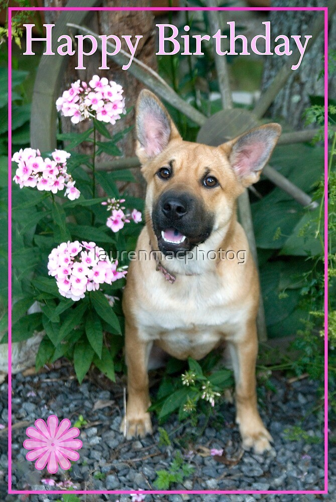 Happy Birthday Dog With Pink Flowers By