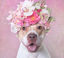 Blossom Pit Bull Products