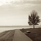 Peaceful Tree by joesterne